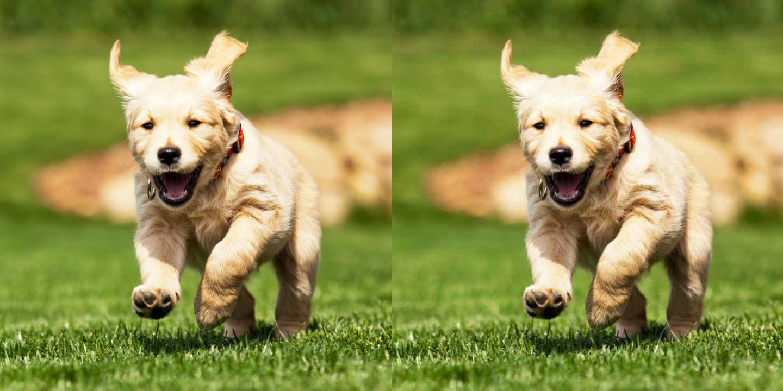 Dog Compression Side by Side.jpg